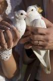 De duiven van het huwelijk Royalty-vrije Stock Afbeeldingen