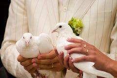 De duiven van het huwelijk Stock Afbeelding