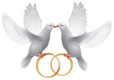 De duiven van het huwelijk met ringen Royalty-vrije Stock Fotografie