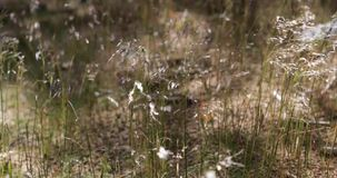 De dunne vegetatie beweegt in een sterke wind stock footage