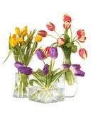 de durée toujours vases en verre à tulipes Photos stock