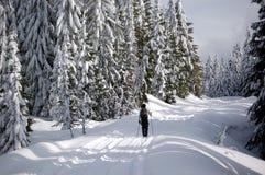 De dwars Skiër van het Land Stock Afbeeldingen