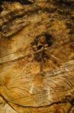 De dwarsdoorsnede van het ronde hout Royalty-vrije Stock Afbeeldingen