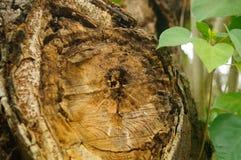 De dwarsdoorsnede van het ronde hout Royalty-vrije Stock Fotografie