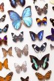 De echte Inzameling van de Vlinder stock fotografie