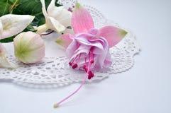 De echte kleurrijke fuchsiakleurig bloem met groen doorbladert Geïsoleerd op de witte achtergrond Royalty-vrije Stock Foto