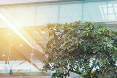 De Ecobouw of groen de boombinnenland van de bureauinstallatie Stock Afbeelding