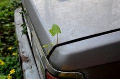 De Ecoinstallatie begint met zijn leven en groeit van de boomstam van een oude gesloopte auto ecologie Royalty-vrije Stock Foto's