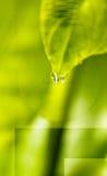 De ecologie van de collage Royalty-vrije Stock Afbeeldingen