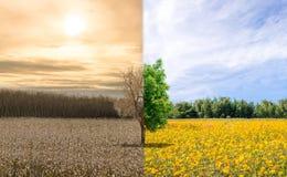 De ecologie van de milieuverandering globale het verwarmen droogte of verfrissende boom Royalty-vrije Stock Foto's