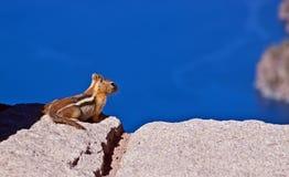 De Eekhoorn die van de grond van Mening geniet Stock Afbeeldingen