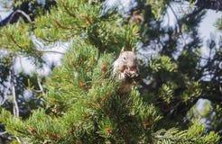 De eekhoorn eet noten van een vogelbol stock afbeeldingen