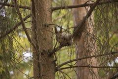 De eekhoorn eet voedsel bij de trog royalty-vrije stock fotografie