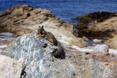 De eekhoorn van de grond Royalty-vrije Stock Foto