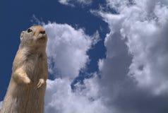 De eekhoorn van de grond en cloudscape Stock Afbeelding