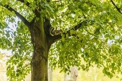 De Eekhoorn van de grond op Tak Stock Foto