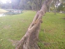 De eekhoorn vindt voedsel op de boom stock foto's