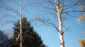 De eekhoorn zit op een boom stock footage