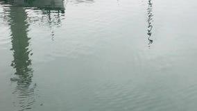 De eend bij het overzees stock footage