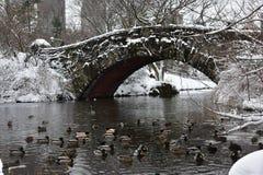 De eenden die in het meer in Central Park tijdens de sneeuw zwemmen stormen Niko Manhattan, de Stad van New York Stock Foto