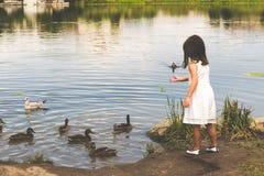 De eenden verzamelen zich bij de vijver om voedsel van een klein meisje te krijgen Stock Foto