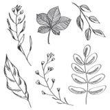 De eenvoudige bladeren en de takken overhandigen getrokken schets royalty-vrije illustratie