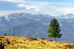 De eenzaamheid van de boom stock foto's