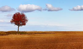 De eenzaamheid van de herfst stock foto's