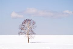 De eenzaamheid van de winter Royalty-vrije Stock Afbeeldingen