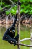 De eenzame aap stock foto's