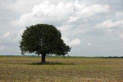 De eenzame Achtergrond van de Boom Stock Fotografie