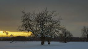 De eenzame bomen bevinden zich op een de wintergebied tegen de achtergrond van een oranje zonsondergang stock videobeelden