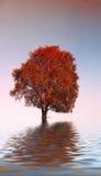 De eenzame boom Stock Foto