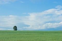 De eenzame boom Stock Foto's