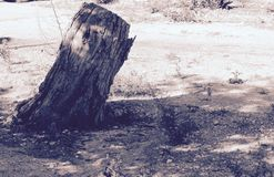 De eenzame boom Royalty-vrije Stock Foto