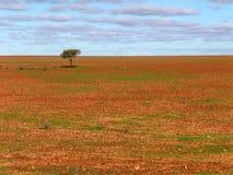 De eenzame boom brabbelt vlakte Stock Foto's