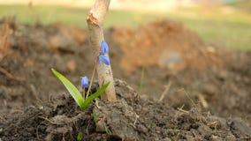 De eenzame boom die dichtbij de jonge boomstam van een boom groeit royalty-vrije stock afbeelding