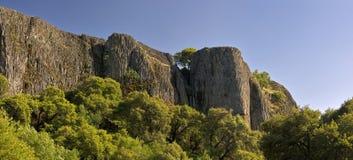 De eenzame boom groeit onder zuivere klippen Stock Afbeelding