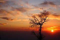 De eenzame boom tegen een fascinerende zonsondergang Royalty-vrije Stock Afbeeldingen