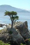De eenzame Boom van de Cipres op Schiereiland Monterey Stock Foto