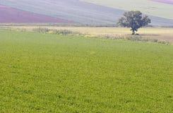 Landschaps eenzame boom stock foto