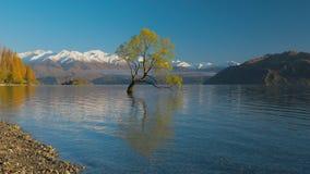 De Eenzame boom van Meer Wanaka en sneeuwbuchanan-Pieken, Zuideneiland, Nieuw Zeeland stock video