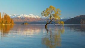 De Eenzame boom van Meer Wanaka en sneeuwbuchanan-Pieken, Zuideneiland, Nieuw Zeeland stock videobeelden