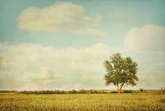 De eenzame boom in weide met wijnoogst ziet eruit Royalty-vrije Stock Foto