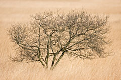 De eenzame boom ziet binnen van gras Royalty-vrije Stock Afbeelding