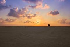 De eenzame droge grond van het boomlandschap met ochtendmist royalty-vrije stock fotografie