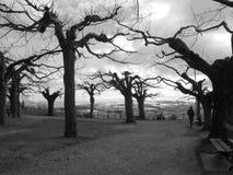 De eenzame Herfst Royalty-vrije Stock Foto's