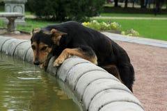 De eenzame hond bekijkt de camera royalty-vrije stock afbeelding