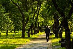 De eenzame mens gaat op weg onder bomen weg Stock Fotografie