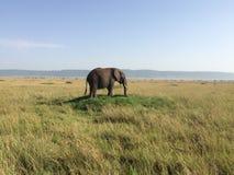 De eenzame olifant Royalty-vrije Stock Afbeeldingen
